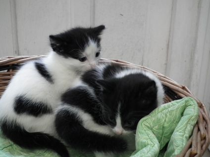 SMUDGE'S KITTENS